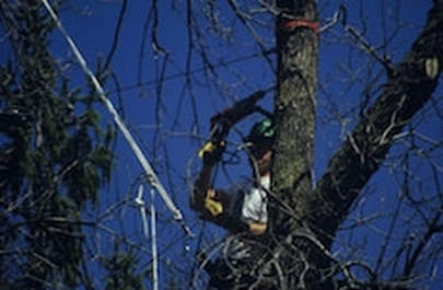 Tree cabling and bracing in Baton Rouge, LA